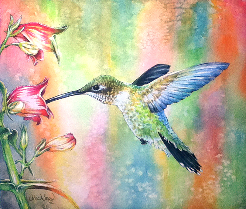 Watercolor Painting of a Female Ruby Throated Hummingbird.